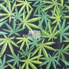 Marijuana Cotton Fabric By Alexander Henry